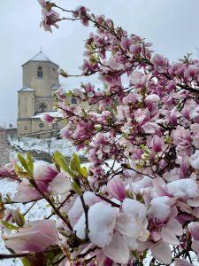 Foto Im Schnee von Meike Hahnraths